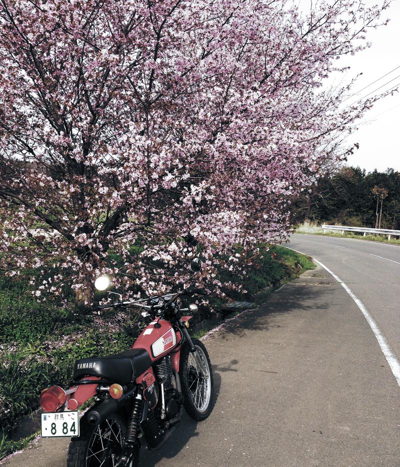 XT500 桜 ヴェルナー